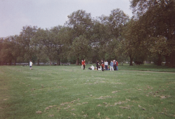 People Gather on the Grass